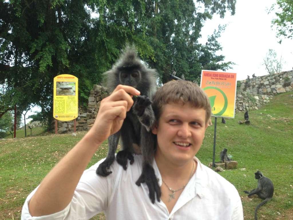 Колония веселых обезьян в пригороде Куала-Лумпура.