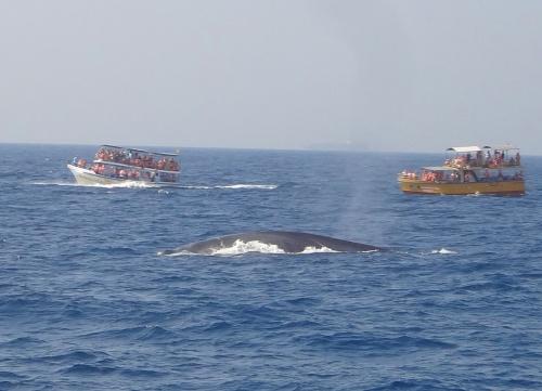 Голубые киты.