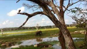 Слоны в естественной среде обитания.