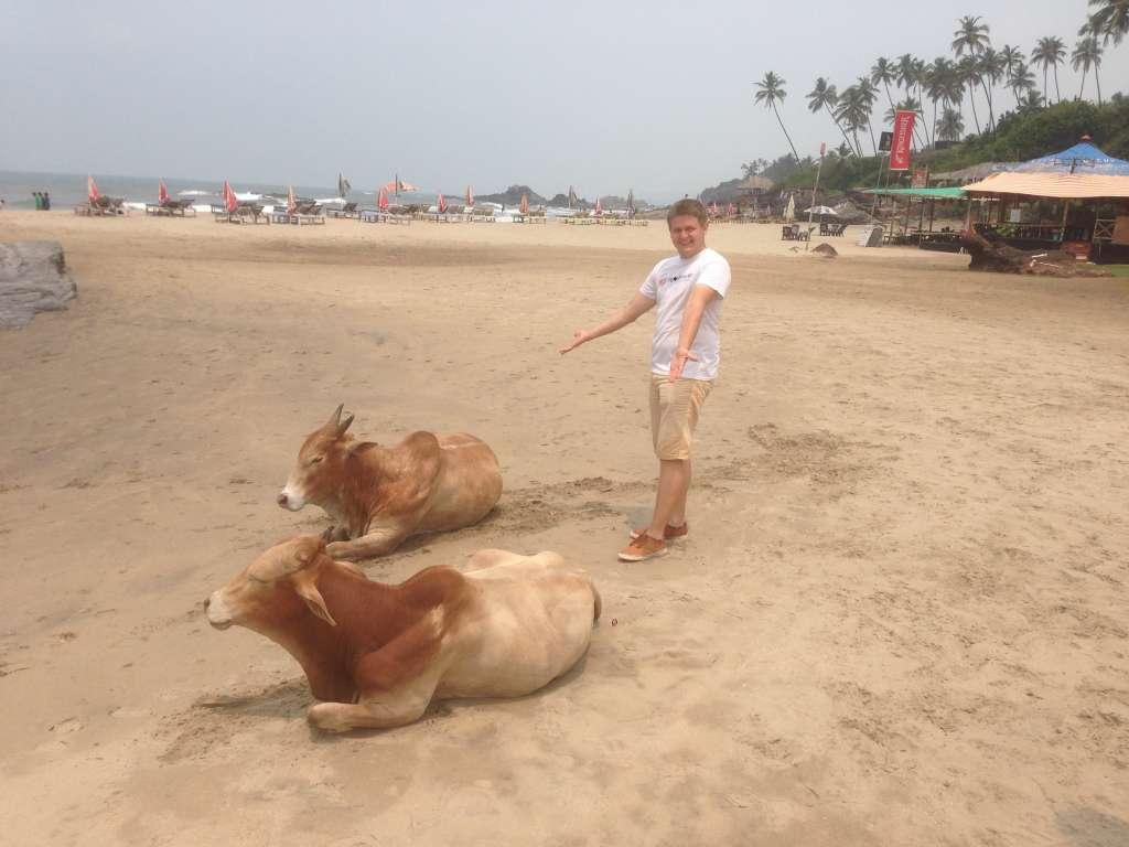 Авторитетные жители пляжа.