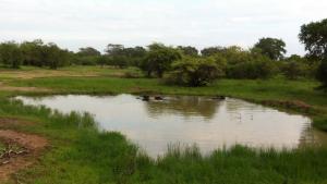 Буффало прохлаждаются в озере.