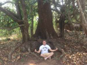 Дерево под которым сидел Будда.